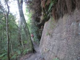 Rock Wall Lyrebird Trail