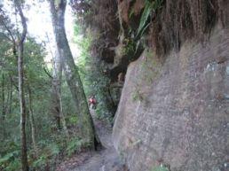 Rock Wall Lyrebird Trail