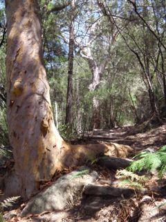 Sphinx Trail Kuring Gai Chase NP